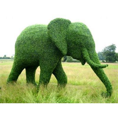 Тропиари слон 2,5